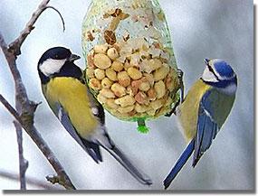 Egyszerű madáretető-háló