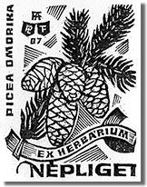 Ex Herbárium: a Szerb lucfenyő (Picea Omorica) Fery Antal Népliget metszetén