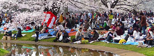 A Yoyogi-park cseresznyevirágzáskor